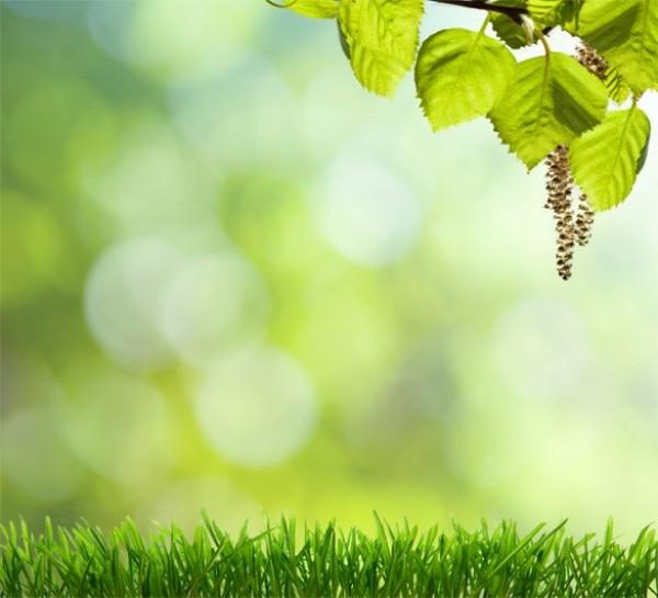 High Resolution Spring Grass Background JPG - WeLoveSoLo