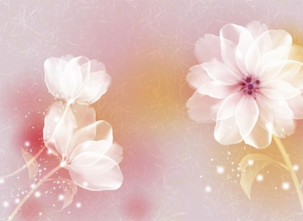 peach color flower wallpaper