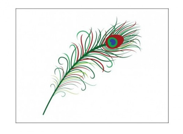 web vector feather vector unique ui elements stylish quality peacock feather peacock original new interface illustrator high quality hi-res HD graphic fresh free download free feather elements download detailed design creative colorful AI