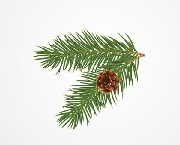 Realistic Pine Bough with Cone Vector Graphic - WeLoveSoLo