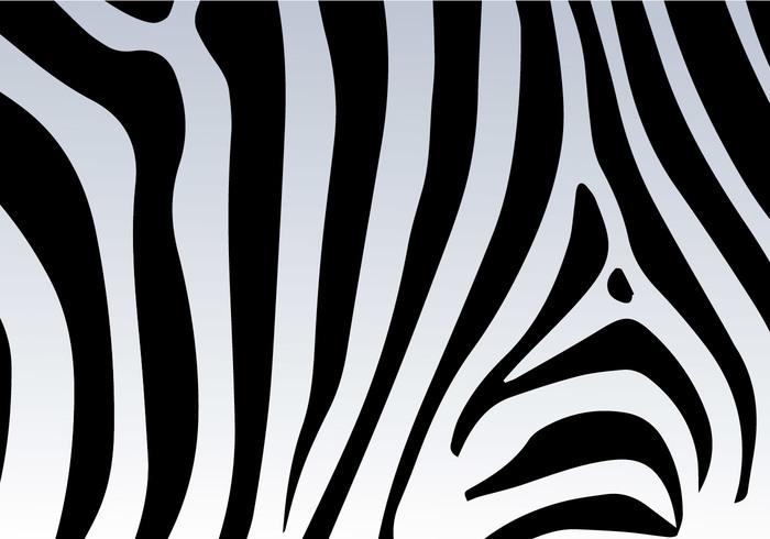 Zebra Print Vector Background 116688 Welovesolo