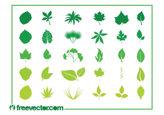 weed stylized spring silhouettes silhouette plants nature Marijuana maple leaves leaf flora