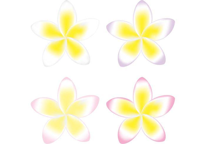yellow flowers yellow flower vector yellow flower yellow tropical polynesian flowers polynesian flower plumeria hawaiian flowers