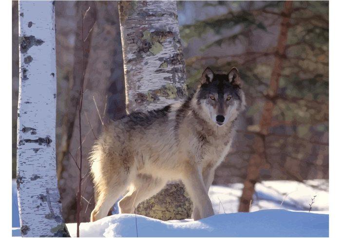 wolf wallpaper vector Grey wolf Gray wolf Extinction dog Dangerous Canis lupus animals