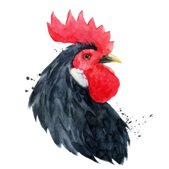 rooster head black