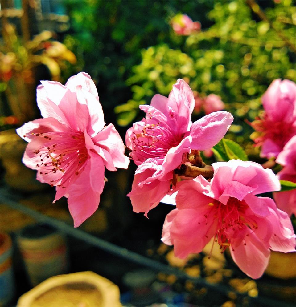 Pink Flowers Pots Welovesolo