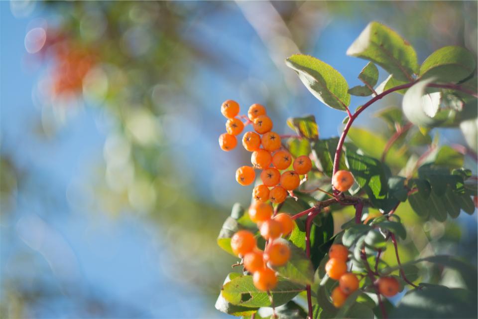 trees plants orange leaves berries
