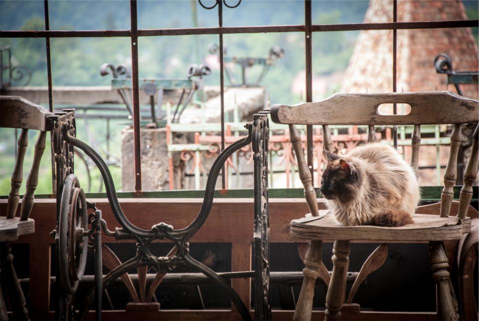 wood pet chair cat
