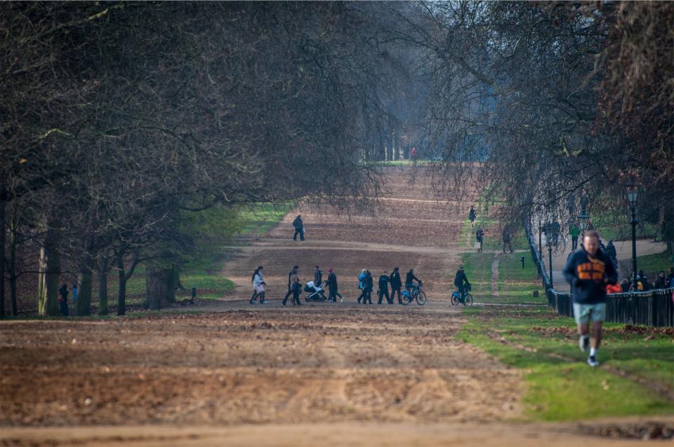 trees running runner people park leaves grass fitness exercise dirt