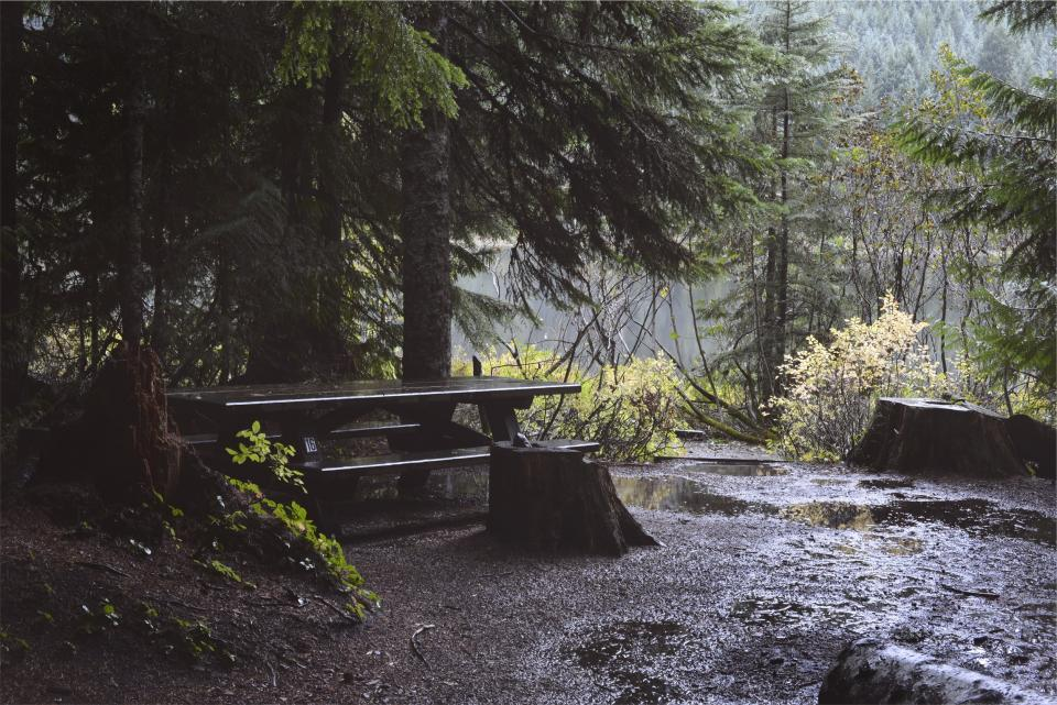 wet trees raining puddles picnictable nature mud dirt