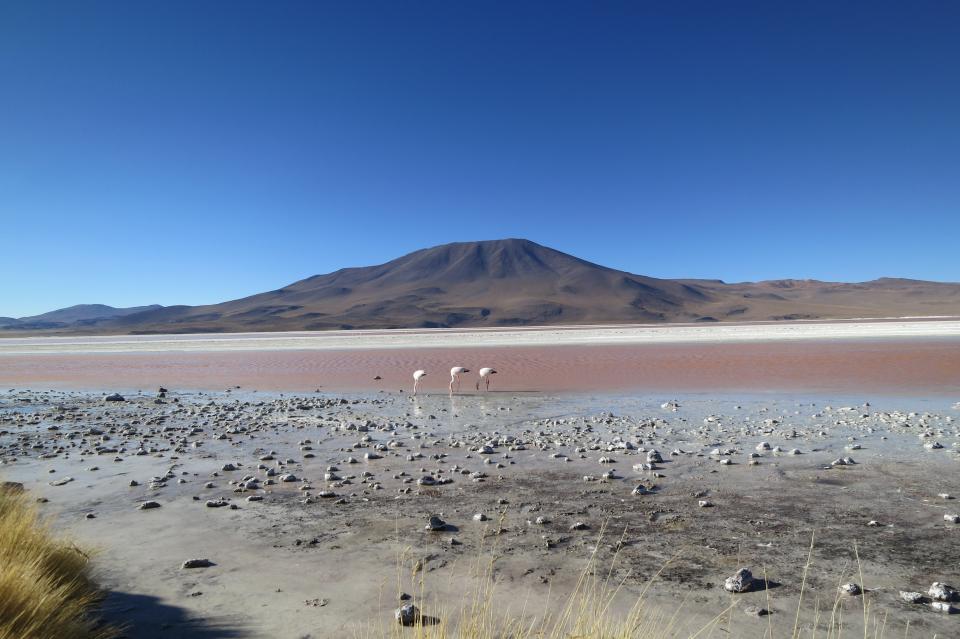 sky sand mountains landscape LagunaColorada Bolivia birds
