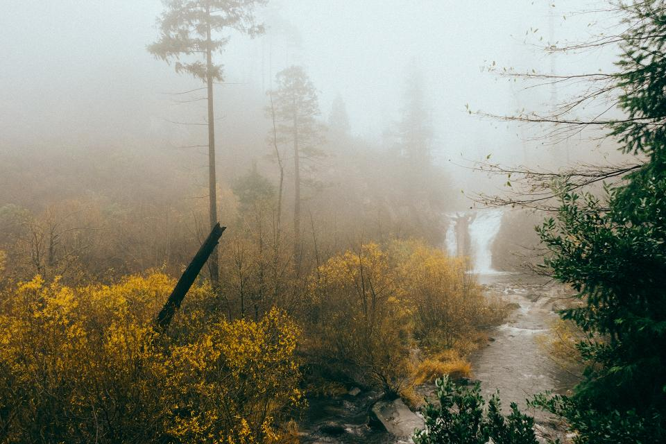 woods wet waterfall trees stream river outdoors nature mist grey foggy bushes