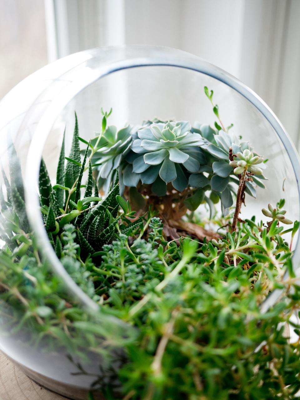 plants green glass bowl