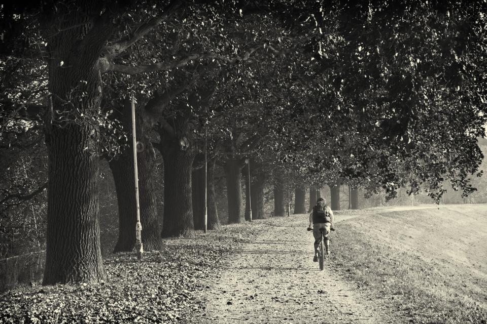 trial trees path grass fitness exercise cyclist blackandwhite biker bike bicycle