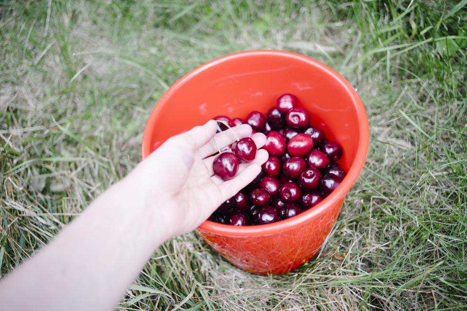 Healthy fruits food cherries bucket