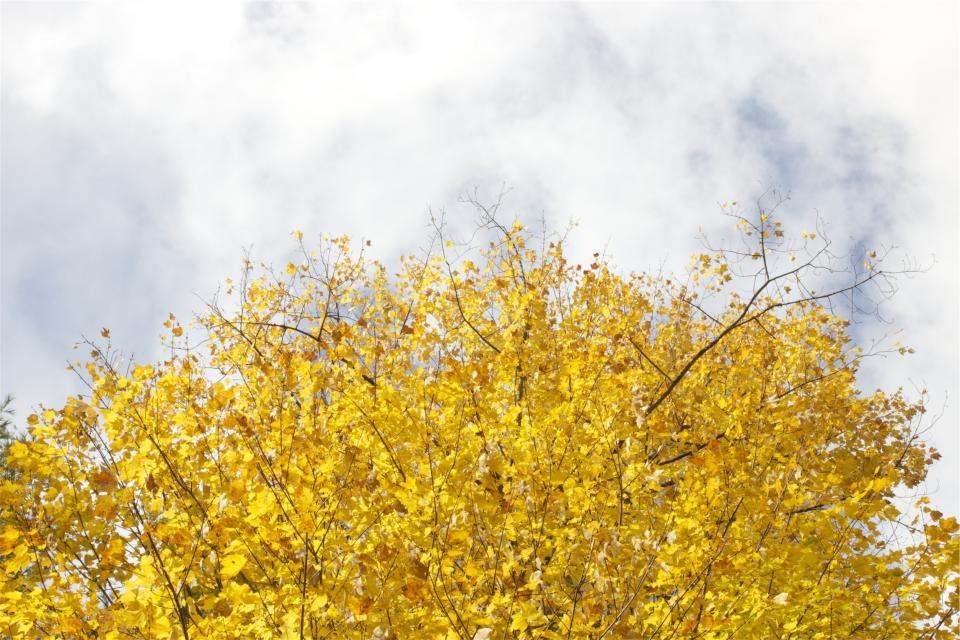 yellow trees sky leaves clouds autumn