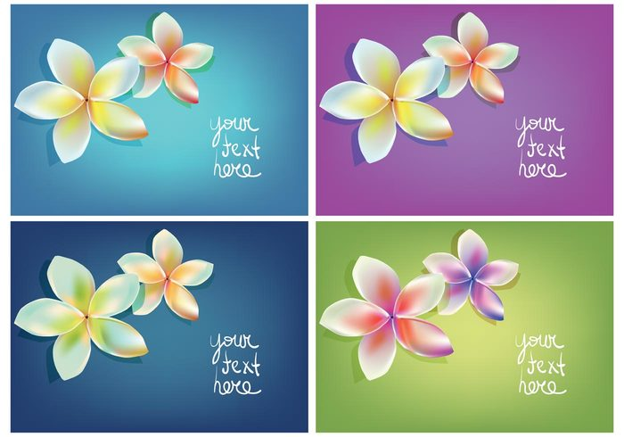vacation tropical Tropic tahitian Tahiti summer subtropical polynesian flower Polynesian plumeria plant pink petal nature isolated Hawaiian hawaii frangipani flower floral card floral background floral exotic bright bouquet blurred blossom bloom beauty