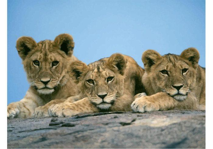 wildlife wild animal vector newborn Lion cub lion king jungle cute Cubs cat Baby lions africa