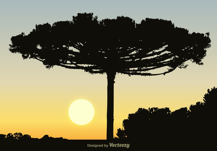 vector trunk tree sunset stem silhouette shape plant outline nature leaf landscape isolated illustration elegant drawing design coniferous trees coniferae branches branch botany black beauty beautiful Backgrounds background backdrop araucaria heterophylla araucaria araucana araucaria