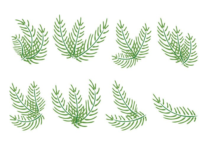 vegetation tree Tradition sunday summer religious religion palm sunday palm nature leafs leaf jesus icon holiday green floral festive easter concept christian Christ celebration catholic canvas branch blooming blessed beach background art
