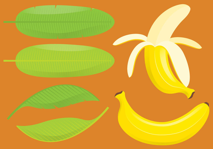 yellow white vector tropical symbolic symbol sweet summer skin set Ripe raw produce organic Nutritious nature natural market leaf juice isolated illustration icon Healthy groceries green graphic fruit freshness fresh food exotic elements drawing Dieting design collection clip art cartoon banana leaf banana art