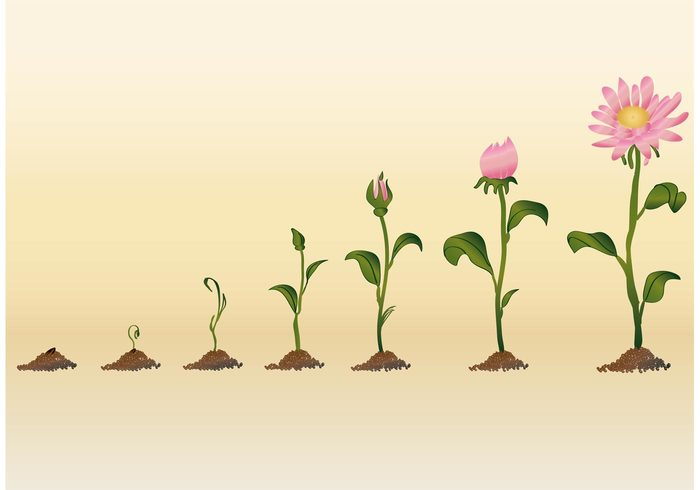 vegetation summer stem sprout spring sowing soil seedling seed sapling process plant pink petal organic nature meadow life leaf growth growing ground green grass gardening garden foliage flower flora field fertility ecological bud botanic blossom bloom birth Biology agronomy agriculture