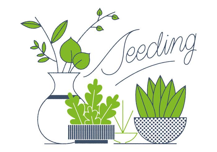 spring pot planter plant nature Houseplant House plant gardening garden flower environment basket agriculture