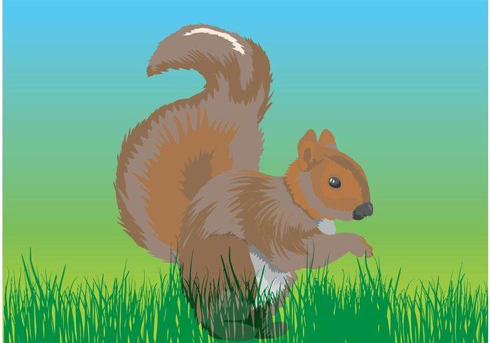 wildlife USA Tame squirrel rodent North America nature mammal feed fauna Chipmunk canada brown asia animal