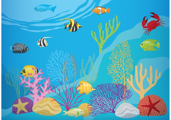 wildlife water underwater tropical Tropic swim starfish shell seaweed Seawater sea life sea reef ocean nautical nature marine life marine lion-fish life herring fish exotic dive depth coral reef with fish coral bubbles background Aquatic animal Angelfish