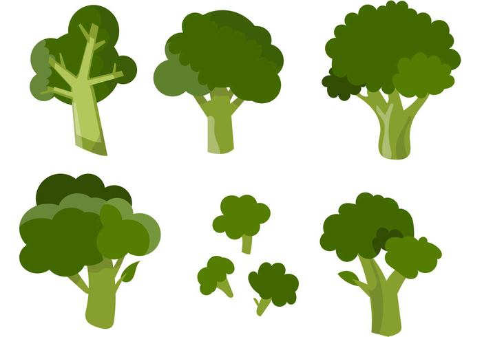 vegetarian vegetable vegan Tasty stem Ripe raw plant organic nutrition nature natural kitchen isolated Healthy green garnish freshness fresh food eating Diet cooking broccoli isolated broccoli