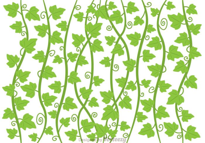 vine vegetation plant nature natural leaf ivy vine ivy growing green garden forest decoration background