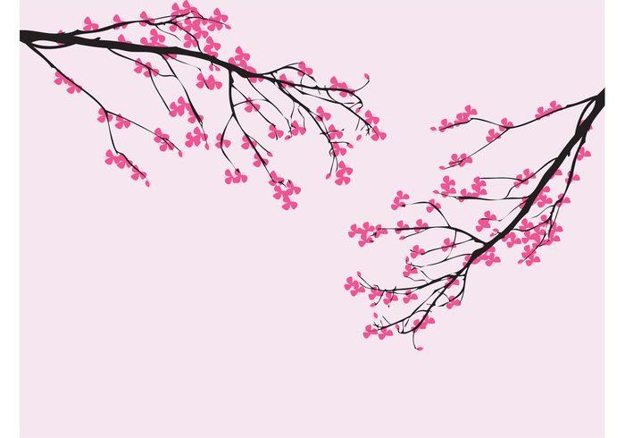 twigs tree spring sakura plants petals nature japan cherry blossom branches blossom bloom