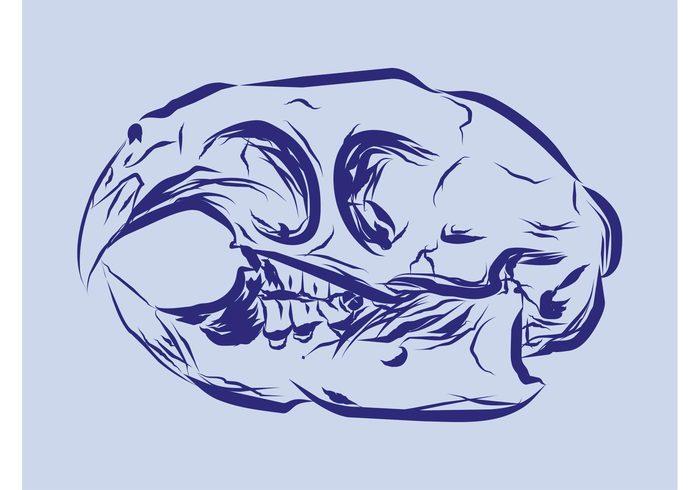 tattoo Skull vector Skull illustration sketch skeleton scary nature hand drawn fauna death dead bones Bird skull bird beak animal