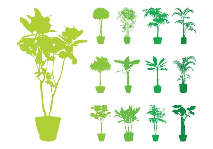 trees tree silhouettes silhouette potted pots pot plants plant nature interior House plants