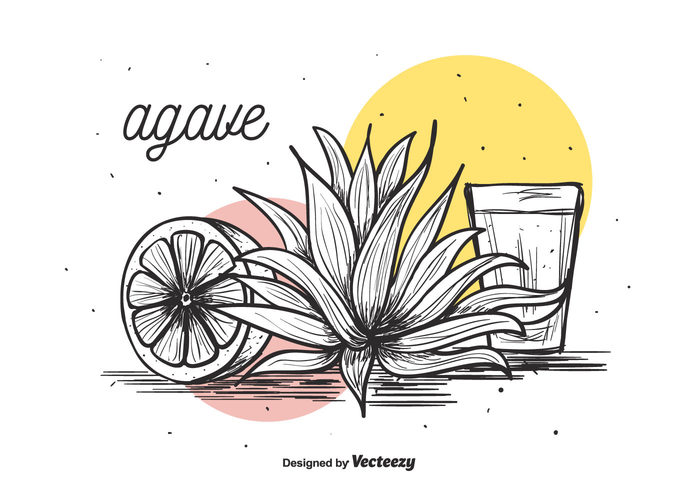 vector thorn tequila succulent plant nature natural maguey lemon illustration Herb hand drawn glass foliage flora drink collection cactus background agave background agave