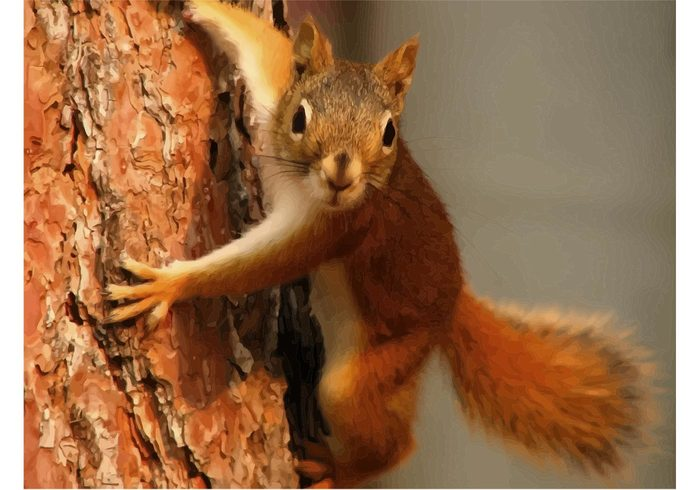 vector tree squirrel rodent orange nuts nature funny Climbing tree climbing Chipmunk animal