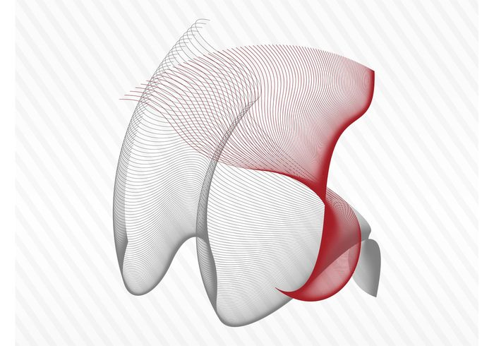 wireframes wire frame shape Proportions lines form flowing flower detailed curves complex abstract 3d