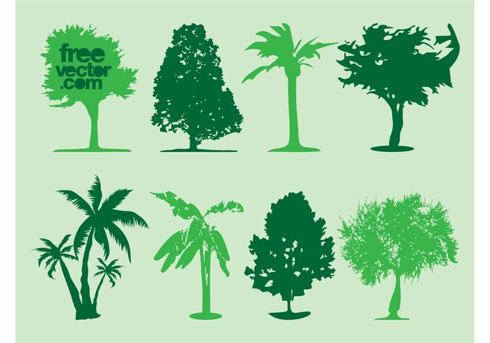 trunks trees silhouettes plants palms palm trees nature leaves flora crowns