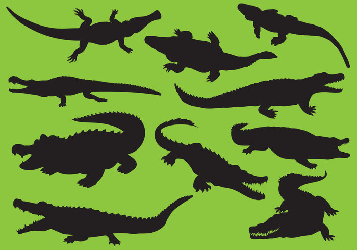 Zoo wildlife wild vector tropical skin sketch silhouette reptile predator pattern outline niloticus nile nature mascot jungle Jaws isolated illustration icon happy hand gator fauna drawn design danger cute crocodile color character cartoon Carnivore caiman background art animal alligator Aggressive africa abstract