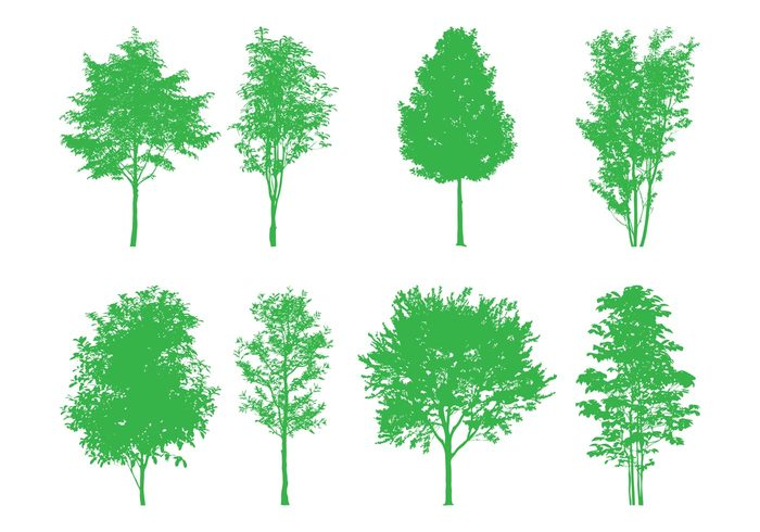 trees tree silhouettes plants nature leaves forest eco deciduous crowns branches