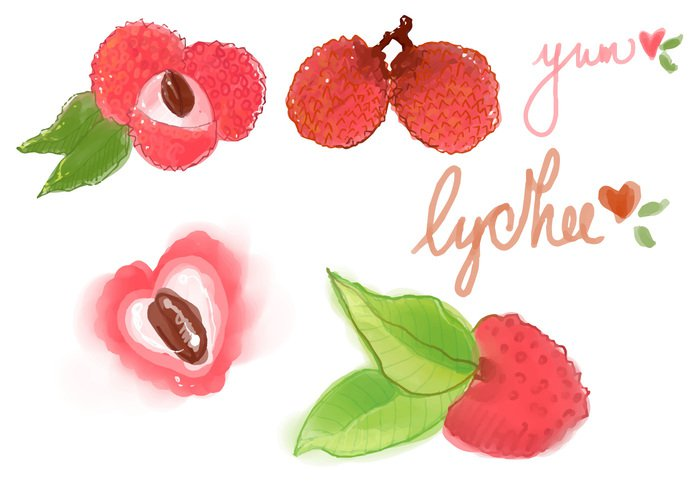 white vitamin vegetarian vector tropical sweet summer slice set Ripe red raw plant pink piece organic object nature natural lychee Litchi lichi lichee leaf juicy juice isolated illustration icon Healthy health Half green fruit freshness fresh food exotic Diet design cut color Berry background Asian art