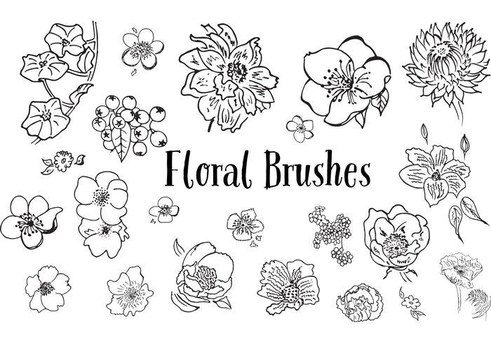 sketch roses rose poppy poppies hand drawn flowers flower drawn