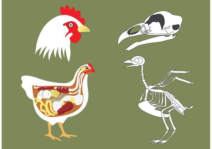 Chicken Bone Vectors 122277 - WeLoveSoLo