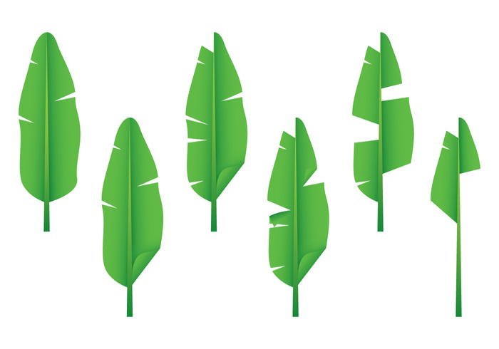 vector tropical Tropic tree summer set Rainforest rain forest rain plantation plant organic orchid nature natural monstera leaf jungle isolated illustration green grass graphic gardening garden fresh forest foliage flower flora design decoration collection botany Biology beauty banana leaf banana background
