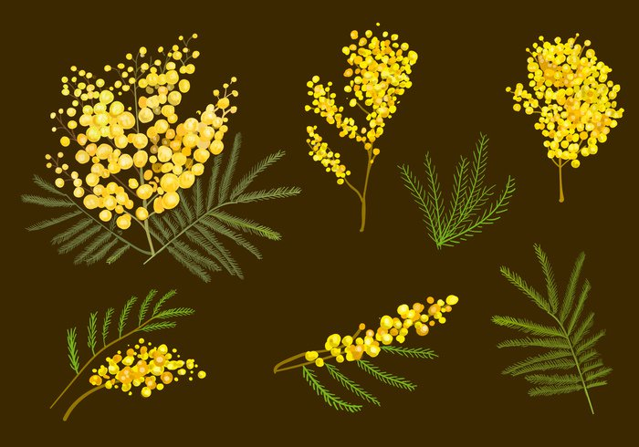 yellow women vegetation tree spring soft plant nature mimosa March leaf isolated image holiday freshness fluffy flower floral Detail design decorative decoration decor day colorful color bunch bud branch bouquet botanical blowing Blossoming blossom beauty beautiful background Aquarelle