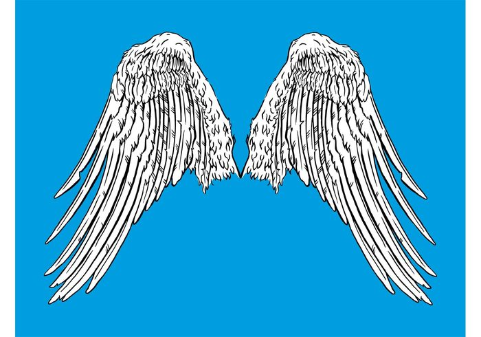 wings wing Plumage Pair of wings flying fly flight feathers bird animal angel