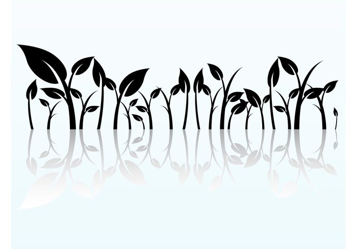 vines reflection plants nature leaves leaf grow graphics flowers floral element botany agriculture