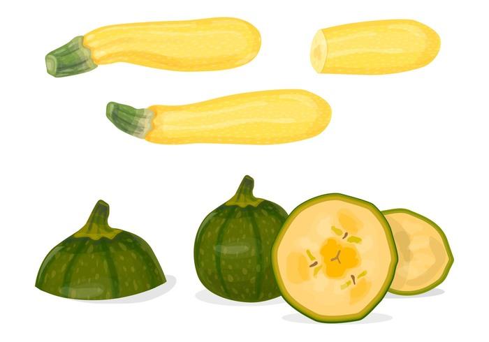zucchini squash zucchini yellow vegetable squash simple Healthy green gourd garden freshness fresh food fresh food flat eating design cooking