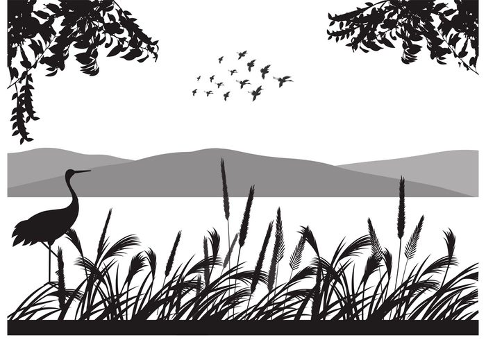 wings winged white vector symbol silhouettes shape set nature many landscape isolated illustration group graphic formation fly flock of birds vector flock flight feather design clip art black birds background animals