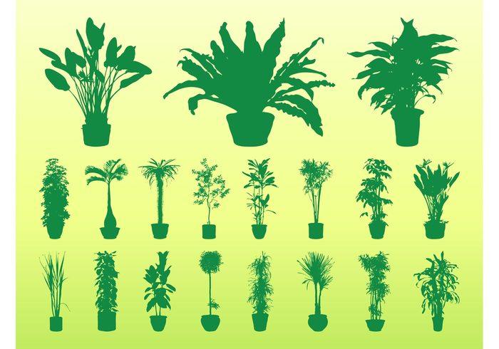 Stems silhouettes silhouette potted pots pot plants plant palms nature leaves leaf interior House plants home flora